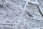 Talvine lemmik