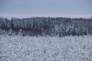 Päris talv